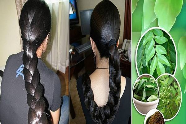 Forum on this topic: Hair fall control with curry leaves How , hair-fall-control-with-curry-leaves-how/