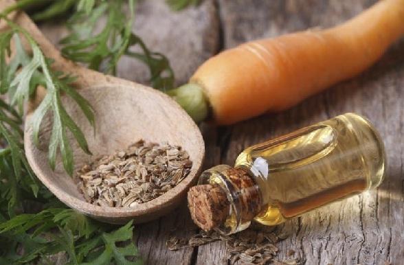 त्वचा के लिए गाजर के बीज का तेल - Carrot seed essential oil for skin care in Hindi