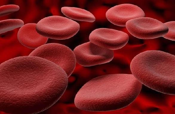 जावित्री के गुण रक्त परिसंचरण को बढ़ावा देने के लिए - Javitri Benefits for Blood Circulation in Hindi