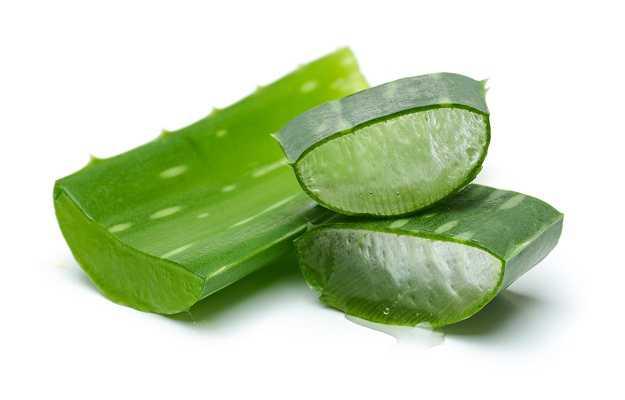 एलो वेरा त्वचा की खुजली से जुडी समस्या को रखे दूर - Aloe vera good for itchy skin in Hindi